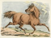 Henry Thomas Alken - Brown Horse Running, 1817