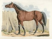 Henry Thomas Alken - Dark-Brown Horse, 1817