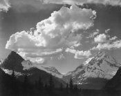 Ansel Adams - Trees in Glacier National Park, Montana - National Parks and Monuments, 1941