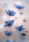 Mandy Disher - Cosmos Blue
