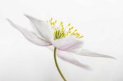 Mandy Disher - Nemorosa