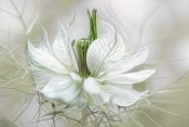 Mandy Disher - Nigella