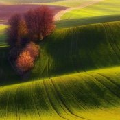 Piotr (Bax) Krol - Green Fields