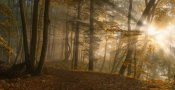 Norbert Maier - Forest Light