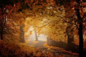 Ildiko Neer - Turn To Fall