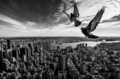 Sergiosousa - Pigeons On The Empire State Building