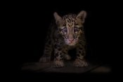 Ashley Vincent - Awestruck