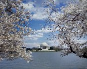 Carol Highsmith - Jefferson Memorial with cherry blossoms, Washington, D.C.