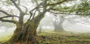 Frank Krahmer - Laurel forest in fog, Madeira, Portugal