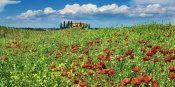 Frank Krahmer - Farm house with cypresses and poppies, Tuscany, Italy