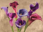 Jenny Thomlinson - Multi-colored Callas