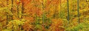 Frank Krahmer - Beech forest in autumn, Kassel, Germany
