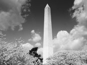 Carol Highsmith - Washington Monument and cherry trees, Washington, D.C. - Black and White Variant