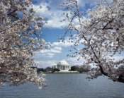 Carol Highsmith - Jefferson Memorial with cherry blossoms, Washington, D.C. - Vintage Style Photo Tint Variant