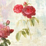 Eric Chestier - Redoute's Roses 2.0 II