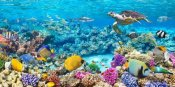 Pangea Images - Sea Turtle and fish, Maldivian Coral Reef