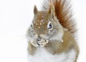 Mircea Costina - Christmas Squirrel