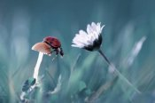 Fabien Bravin - The Story Of The Lady Bug That Tries To Convice The Mushroom To Have A Date With The Beautiful Daisy