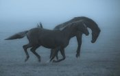Allan Wallberg - Horses In The Fog