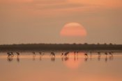 Joan Gil Raga - Flamingos At Sunrise