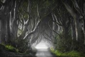Nicola Molteni - Dark Hedges
