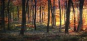 Photokes - Autumn Woodland Sunrise