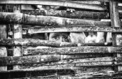 Marco Tagliarino - the eyes behind the fence
