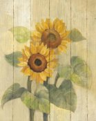 Albena Hristova - Summer Sunflowers I on Barn Board