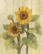 Albena Hristova - Summer Sunflowers II on Barn Board