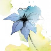 Avery Tillmon - Watercolor Graphite Flower V