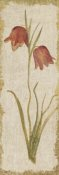 Cheri Blum - Red Tulip Panel on White Vintage