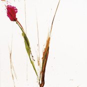 Jan Griggs - Pink Buds I on White