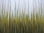 Katherine Gendreau - Sea Grass Canvas