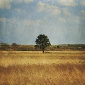 Katherine Gendreau - The Lonely Tree