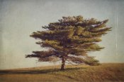 Katherine Gendreau - Windward Tree