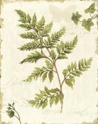 Lisa Audit - Ivies and Ferns I no Dragonfly