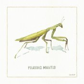 Lisa Audit - My Greenhouse Praying Mantis