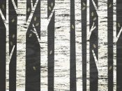 Michael Mullan - Birch Forest