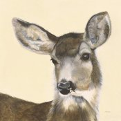 Patsy Ducklow - Whitetailed Deer II