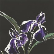 Chris Paschke - Iris on Black I
