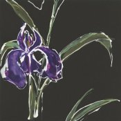 Chris Paschke - Iris on Black II