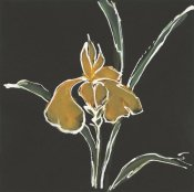 Chris Paschke - Iris on Black VI