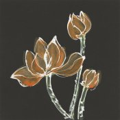 Chris Paschke - Lotus on Black IV
