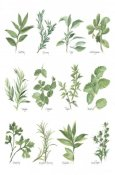 Chris Paschke - Herb Chart