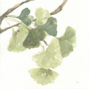 Chris Paschke - Gingko Leaves I on White