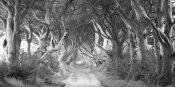 Pangea Images - The Dark Hedges, Ireland (BW)