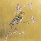 Danhui Nai - Female Goldfinch on Gold