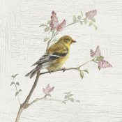 Danhui Nai - Female Goldfinch Vintage