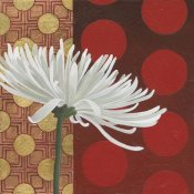 Kathrine Lovell - Morning Chrysanthemum I