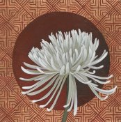 Kathrine Lovell - Morning Chrysanthemum III